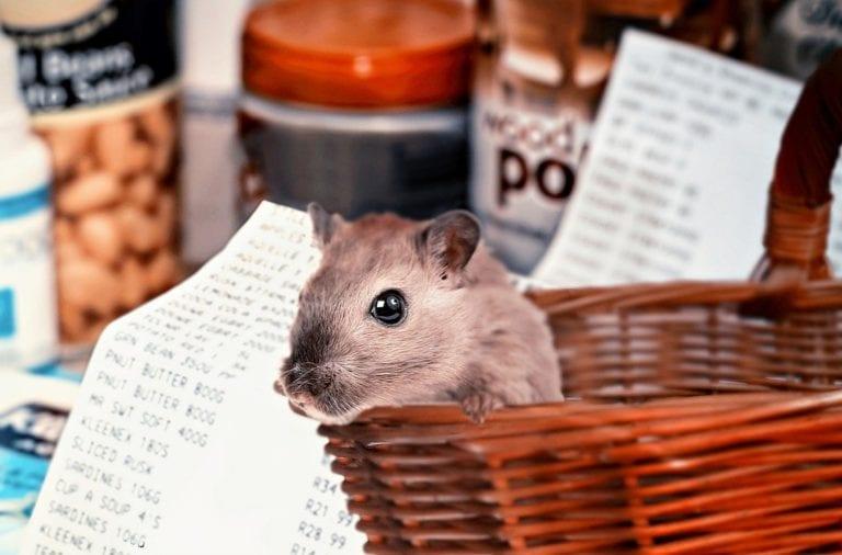 Hamsterkauf im Supermarkt